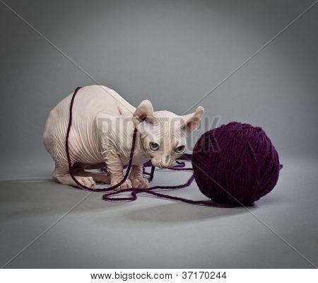 tangled elf cat