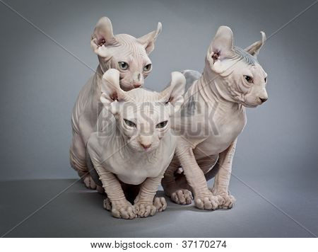 three creepy cats