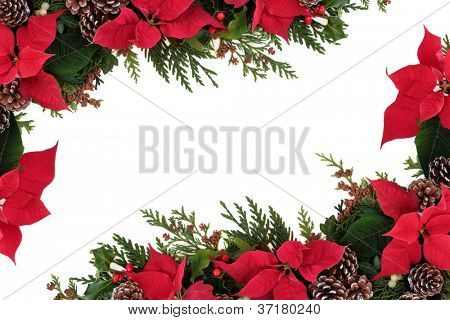 Christmas decorative border of poinsettia flower heads, holly, ivy, mistletoe and cedar leaf sprigs with pine cones over white background.
