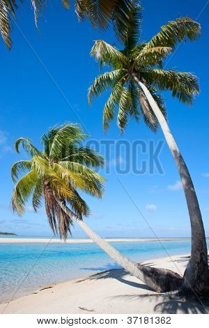 Palm trees on stunning beach at Tikehau atoll in French Polynesia