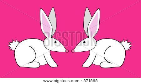 zwei Kaninchen