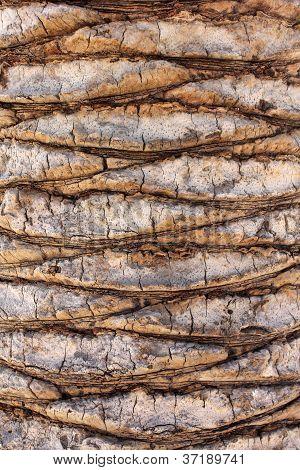textura de bole de Palma