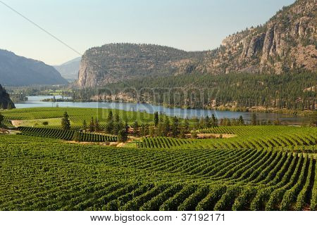 Okanagan Valley Vineyard Scenic, Colúmbia Britânica