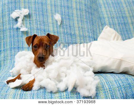cachorro brincalhão travesso após morder um travesseiro cansado do trabalho duro