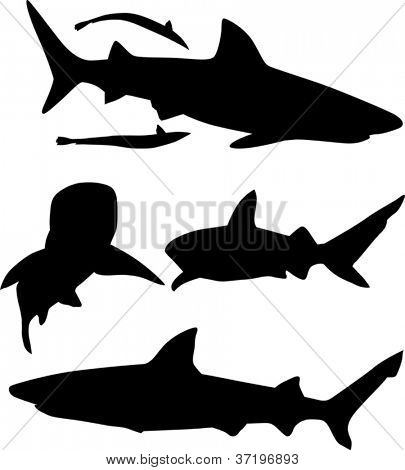 illustration with shark silhouettes collection isolated on white background