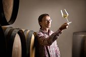 stock photo of wine cellar  - Wine producer inspecting quality of white wine in cellar in front of barrels - JPG