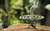 picture of mosquito repellent  - Green spiral insect repellent mosquito coil incense smoking - JPG