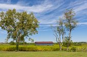 image of tobacco barn  - Country landscape with barn and tobacco plants field - JPG
