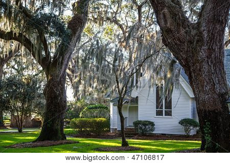 Spanish Moss Around White Church
