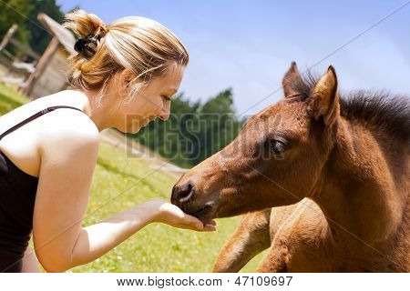 Pretty Woman Feeds An Foal