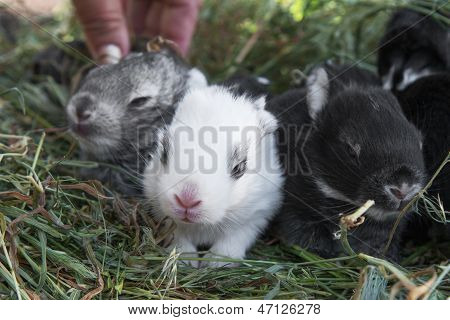 Young Rabbits