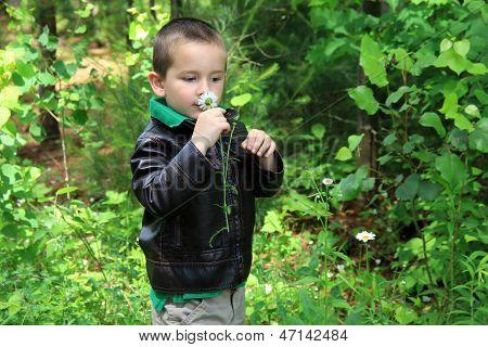 Cute little boy smelling daisy in woods