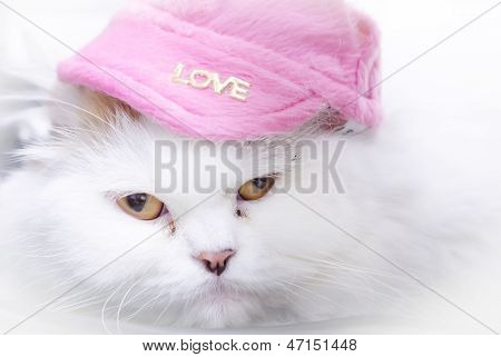 White Persian Cat With Pink Hat