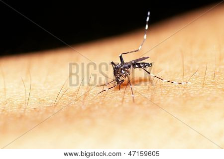 Mosquito is biting