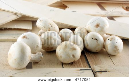 Mushrooms On Wood