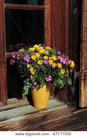 Bunch Of Alpine Wildflowers