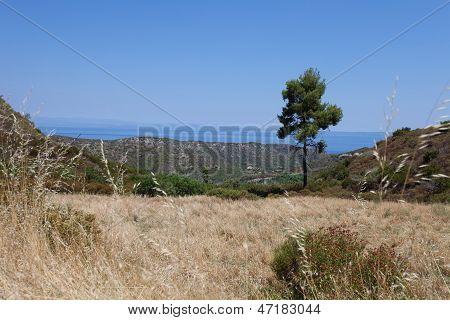 Greek Field Near The Sea