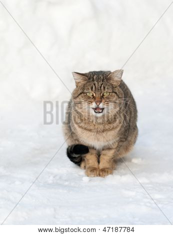 Brown Cat On The White Snow