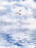 White Dove of the water