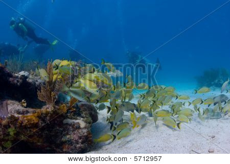 Beautiful reef fish