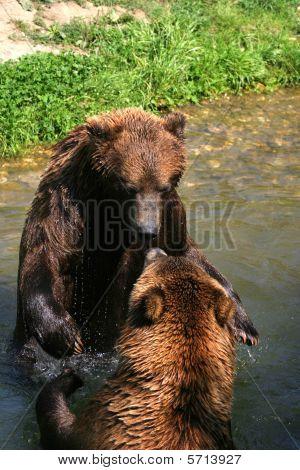 Playing Bears