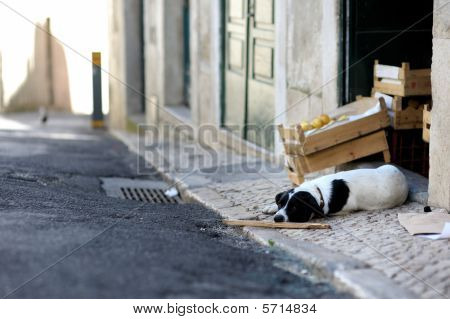 Dog laying in the street