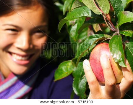 Apple Picking Woman By Tree
