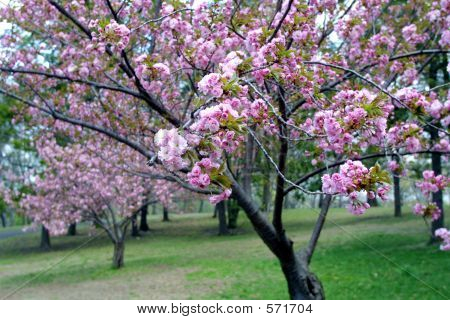 Blossom Flowers In Spring Season