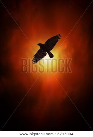 Crow Or Raven In Sky