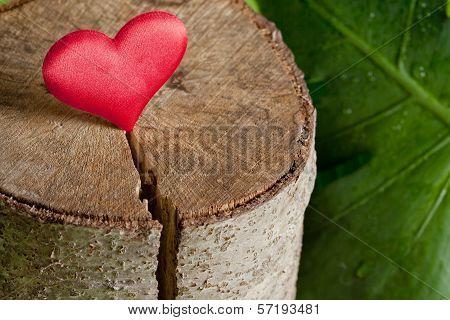 Heart on a Tree cut