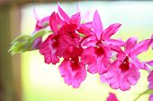 stock photo of orquidea  - tropical beautiful orchid in orchid festival of Thailand - JPG