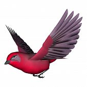 picture of songbird  - 3d digital render of a songbird tanager isolated on white background - JPG