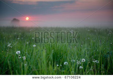Sunrise In A Field