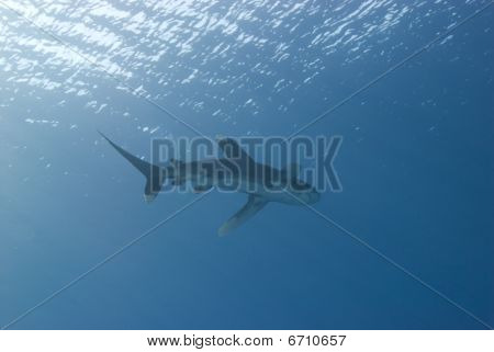 Low Angle View Of A Shark