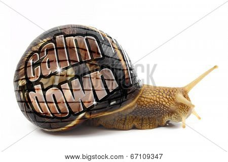 Snail with