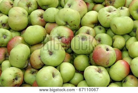 Windfall Apples.