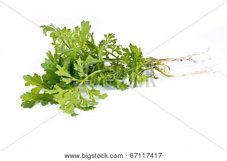 Plant Garden Cress Is Isolated On A White Background