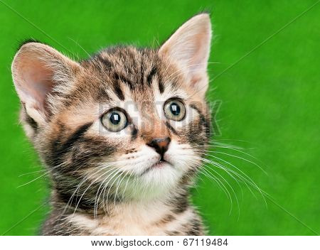Cute little kitten playing on artificial green grass
