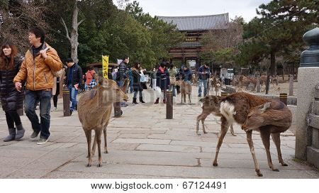 The deer in Nara have been regarded as heavenly animals protecting the city and the country.