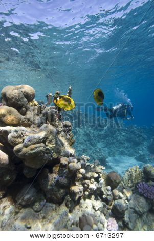 Tropical Sea And Scuba Diver