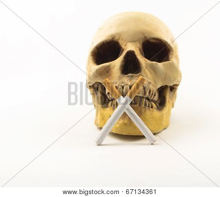 Human Scull With Cigarette On White.