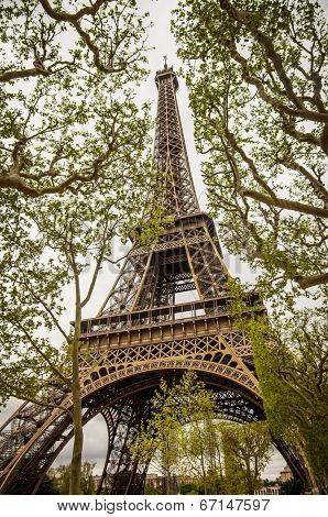 Perspective view of the Eiffel Tower between the trees in Paris