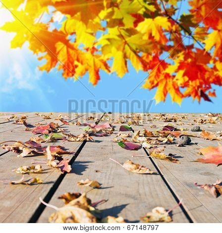 Autumn Leaves Scattered On The Wooden Floor