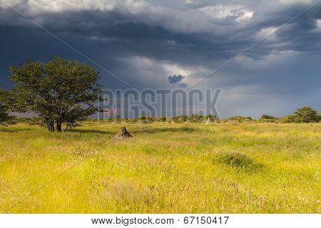 Termite Mounds On Namibian Farmland