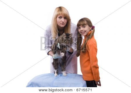 Girl Is Bringing Cat For Examination By Vet
