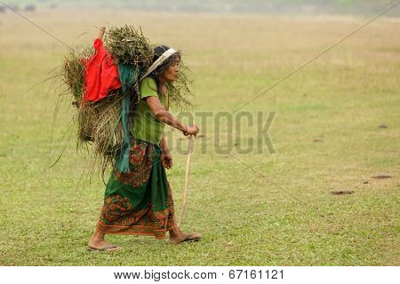 SAUHARA, NEPAL, NOVEMBER 22: Farmer woman carrying plants in a grape basket, walking in a grass area in the Chitwan national park, Terai province, in Nepal on November 22, 2010