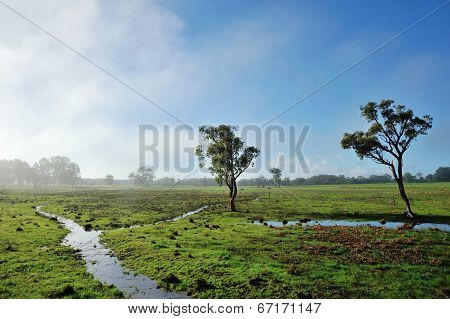 Fog On The Flats