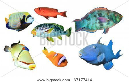 Collection of Tropical Reef Fish isolated on white background