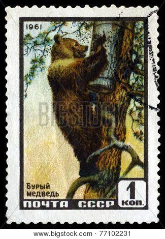 Vintage  Postage Stamp. Brown  Bear.