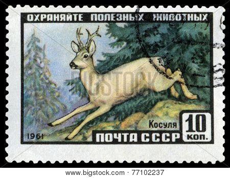 Vintage  Postage Stamp. Roe.